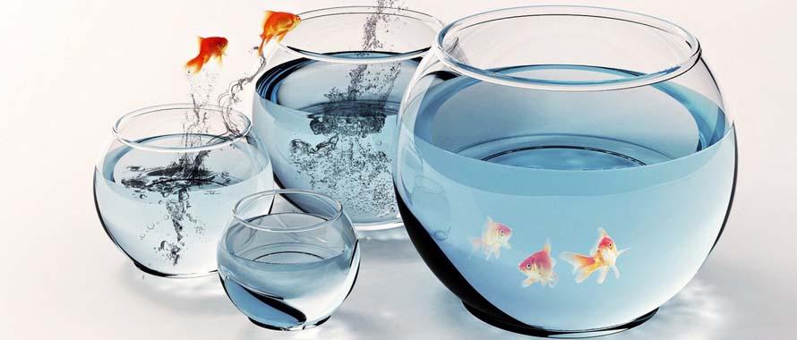 Nuôi Cá Bảy Màu Trong Chậu Thủy Tinh Cực Kỳ Dễ Dàng Guppy